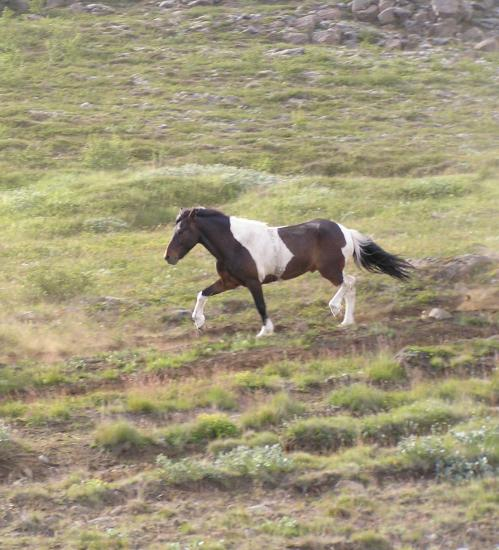 (medium size) horse.jpg