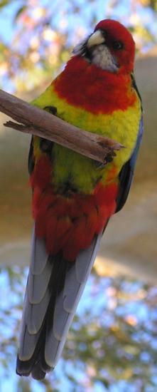 (medium size) parrot.jpg