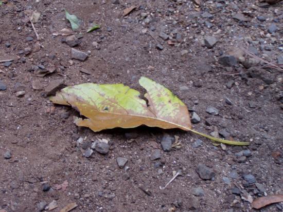 (medium size) leaf.jpg